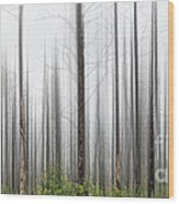 New Jersey Pine Barrens Wood Print