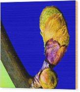 New Leaf Wood Print