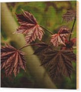 New Leaves For Napanee Wood Print