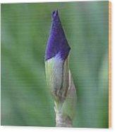 New Life Cycle Iris Bud Wood Print