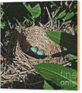 New Life - Robin's Nest Wood Print