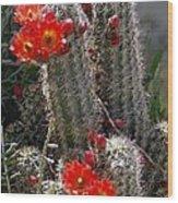 New Mexico Cactus Wood Print