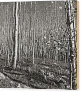New Mexico Series - Bare Autumn Bw Wood Print