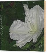 New Moonflower Wood Print
