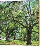 New Orleans City Park - Live Oak Wood Print