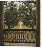 New Orleans Live Oak Wood Print