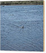 New Orleans - Swamp Boat Ride - 1212108 Wood Print