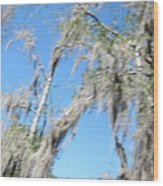 New Orleans - Swamp Boat Ride - 1212127 Wood Print