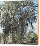 New Orleans - Swamp Boat Ride - 1212129 Wood Print