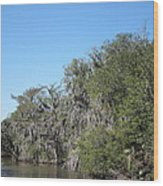 New Orleans - Swamp Boat Ride - 1212130 Wood Print