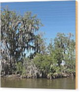 New Orleans - Swamp Boat Ride - 1212132 Wood Print