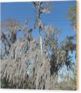 New Orleans - Swamp Boat Ride - 1212138 Wood Print