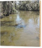 New Orleans - Swamp Boat Ride - 1212143 Wood Print