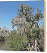 New Orleans - Swamp Boat Ride - 1212144 Wood Print