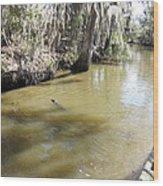 New Orleans - Swamp Boat Ride - 1212145 Wood Print