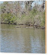 New Orleans - Swamp Boat Ride - 1212157 Wood Print