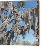 New Orleans - Swamp Boat Ride - 121238 Wood Print