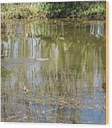 New Orleans - Swamp Boat Ride - 121250 Wood Print