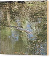 New Orleans - Swamp Boat Ride - 121252 Wood Print