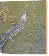 New Orleans - Swamp Boat Ride - 121258 Wood Print