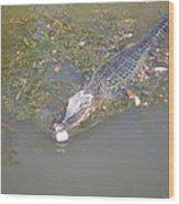 New Orleans - Swamp Boat Ride - 121260 Wood Print