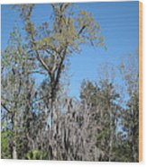 New Orleans - Swamp Boat Ride - 121265 Wood Print