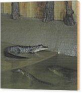 New Orleans - Swamp Boat Ride - 12127 Wood Print