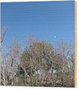 New Orleans - Swamp Boat Ride - 121271 Wood Print by DC Photographer