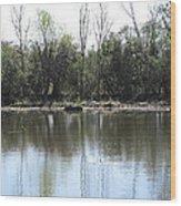 New Orleans - Swamp Boat Ride - 121272 Wood Print