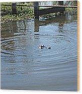 New Orleans - Swamp Boat Ride - 121276 Wood Print