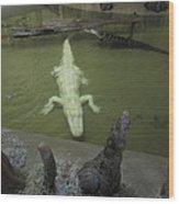New Orleans - Swamp Boat Ride - 12129 Wood Print