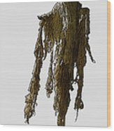New Photographic Art Print For Sale   Day Of The Dead Skeleton On A Stick Wood Print