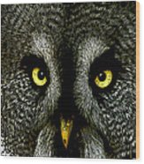 New Photographic Art Print For Sale   Great Grey Owl Wood Print