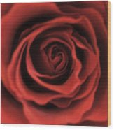 Close Up Heart Of A Red Rose Wood Print