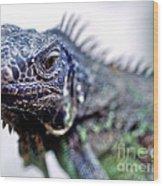 Close Up Beady Eyed Iguana Wood Print