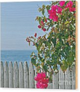 New Photographic Art Print For Sale On The Fence Montecito Bougainvillea Overlooking The Pacific Wood Print