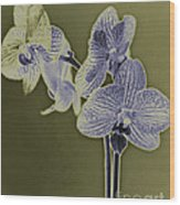 New Photographic Art Print For Sale Orchids 10 Wood Print
