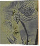 New Photographic Art Print For Sale Orchids 11 Wood Print