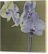 New Photographic Art Print For Sale Orchids 9 Wood Print