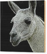 New Photographic Art Print For Sale   Portrait Of  Llama Against Black Wood Print