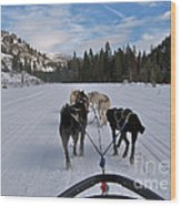 Riding Through The Colorado Snow On A Husky Pulled Sled Wood Print