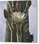 New Photographic Art Print For Sale White Cactus Flower Wood Print