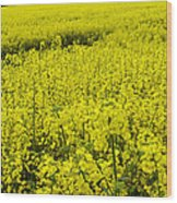 New Photographic Art Print For Sale Yellow English Fields 4 Wood Print