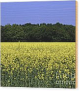 New Photographic Art Print For Sale Yellow English Fields Wood Print