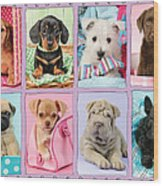New Puppy Multipic Wood Print by Greg Cuddiford