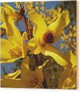 New Season - Old Friend  ... Forsythia In Springtime Wood Print
