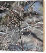 New Spring Buds Wood Print