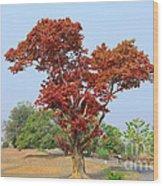 New Spring Leaves On Tree  Wood Print