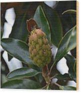 New Start Magnolia Wood Print