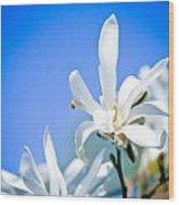New White Magnolia Blossom Wood Print